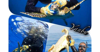 Name and Shame Pictures at The Scuba News