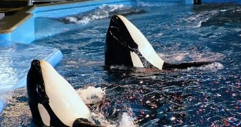 Orca Captivity Photos at The Scuba News