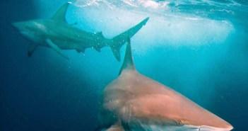 Underwater Photography Art & Techniques