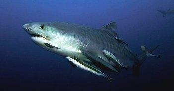 Four Reasons Scuba Divers Should Visit South Africa