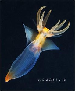 Aquatilis Expedition 1