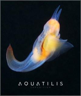 Aquatilis Expedition 8