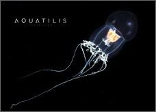 Aquatilis Expedition 9