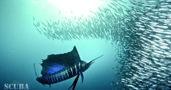 Regaldive releases tickets to the greatest shoal on earth