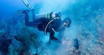 Cayman Islands Reef Restoration