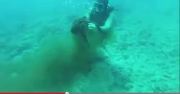 marineharass-screen