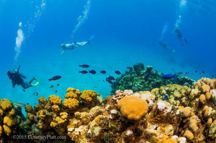 Save Cayman