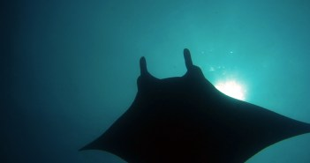 Diving in the Philippines by Torben Lonne