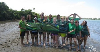 Mangrove planting with Projects Abroad