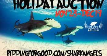 shark-angels-holiday-auction-2