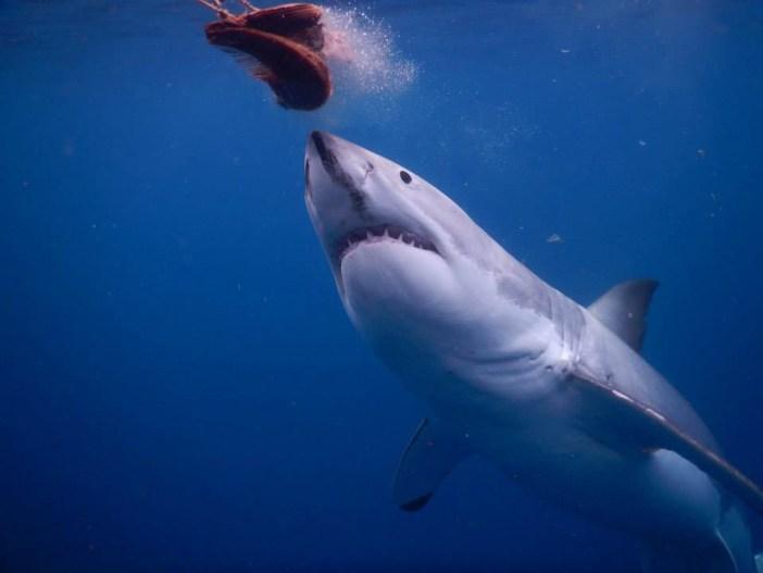 nurse-sharks-20-06-17