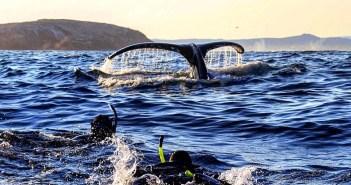 Ocean Quest Humpback Whales