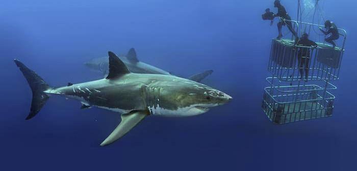 shark-cage-diving-liveaboard-com-16-01-18-2
