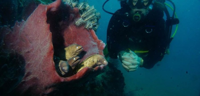 poseidon-divers-chantelle-04-11-18