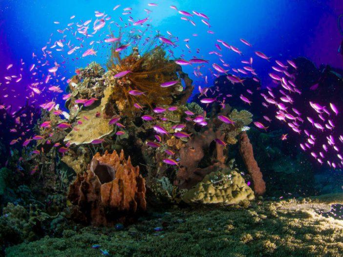 Zentral-Sulawesi, Unterwasser