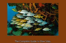 Dive and Travel Cozumel eBook