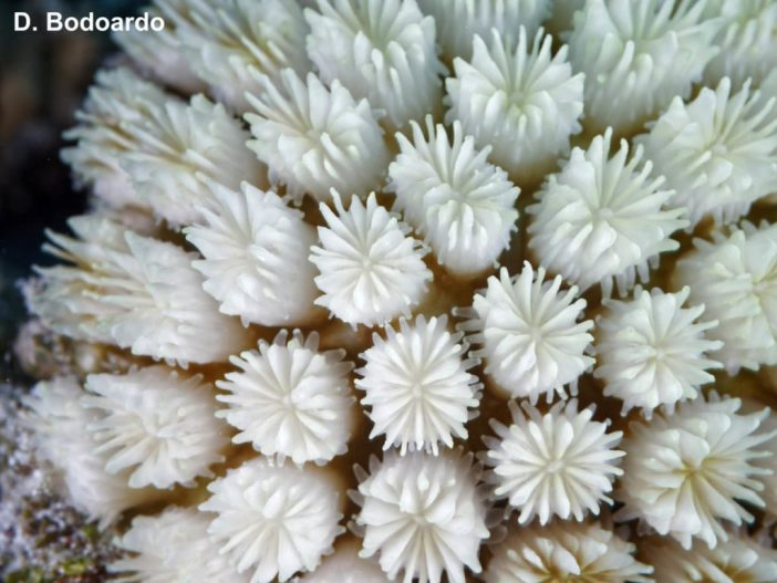 Coral Bleaching Study in the Maldives