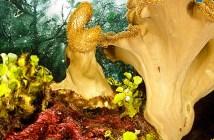 Raja Ampat - Dive Discovery