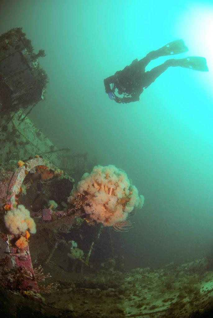 Lunenberg Ocean Adventures