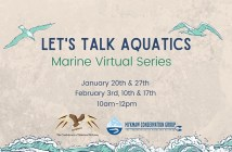 Let's Talk Aquatics