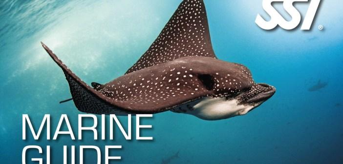 SSI Marine Guide