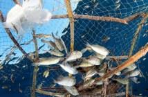 Overfishing