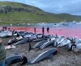 SOS – Dolphin Massacre in the Faroe Islands, Graphic