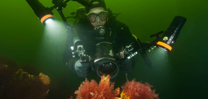 How to Maintain Your Dive Torch?