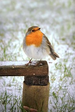 Feed the birds regularly.