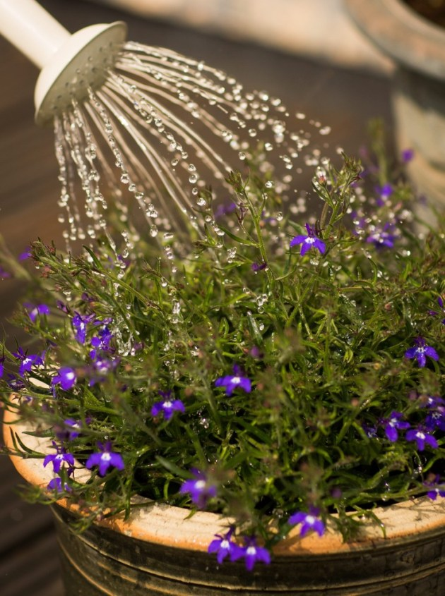 Although using a watering can takes a long time, it wastes less water.