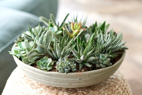 Succulents planted into a bowl make a lovely table centre peice