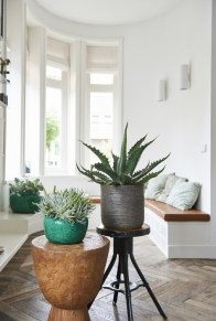 Large cacti or succulents make great statement pieces