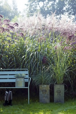 Grasses are looking fab.