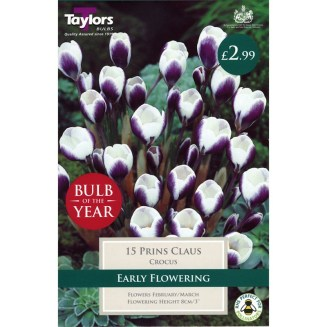 Bulb of the year 2018 Crocus 'Prince Claus'