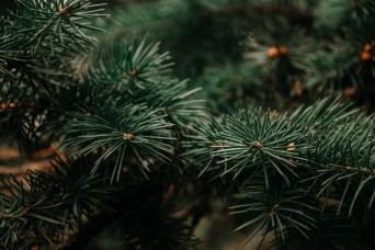 beautiful-blur-branch-943898
