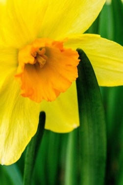 beautiful-blooming-bouquet-1031403