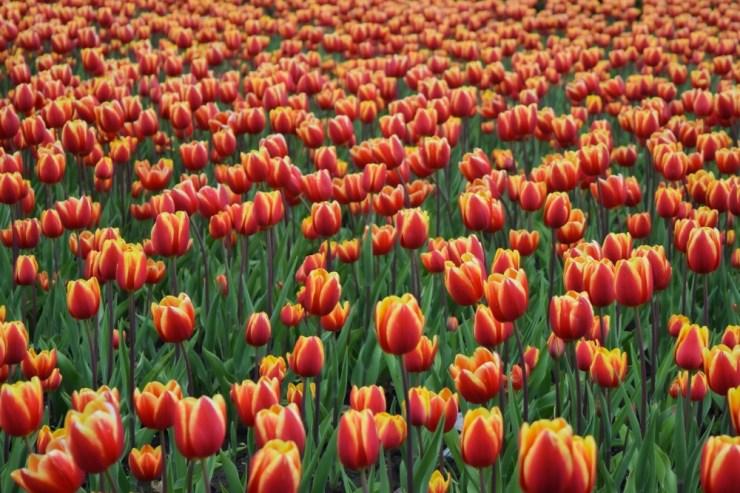 beautiful-flowers-bloom-blooming-2415138