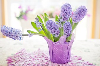 Hyacinths are highly scented