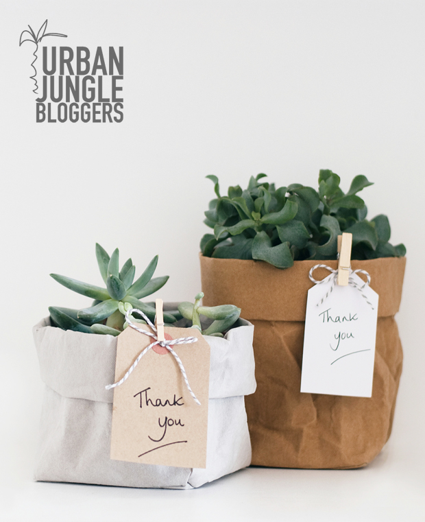 Urban Jungle Bloggers | A green gift | These  Four Walls blog