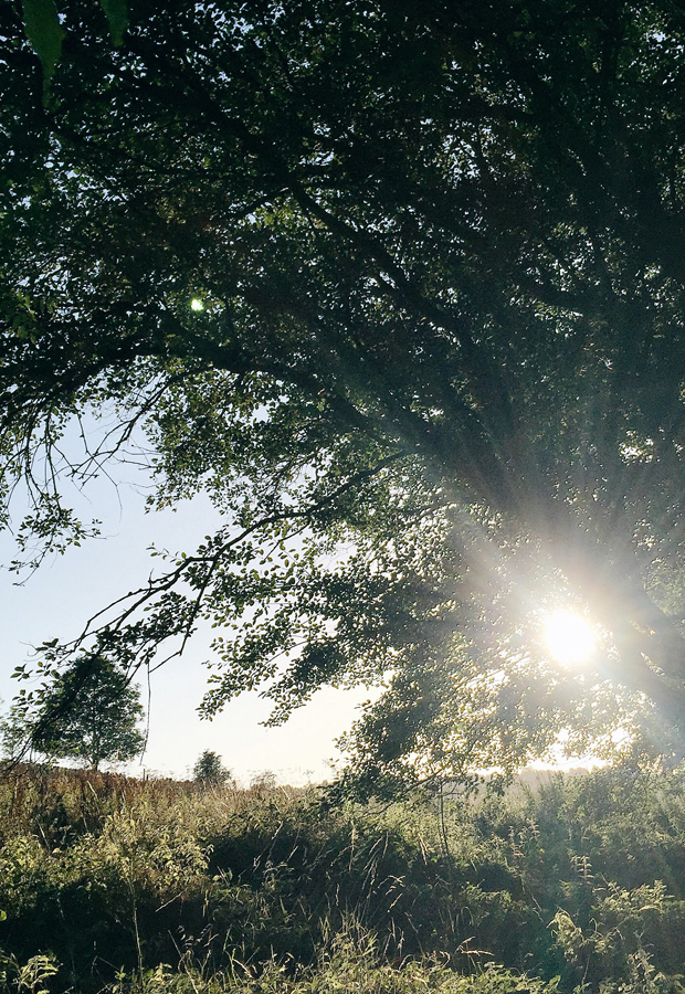 A magical summer moment | These Four Walls blog