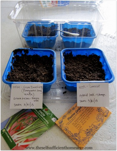 Starting onion seeds in 'nursery' containers.