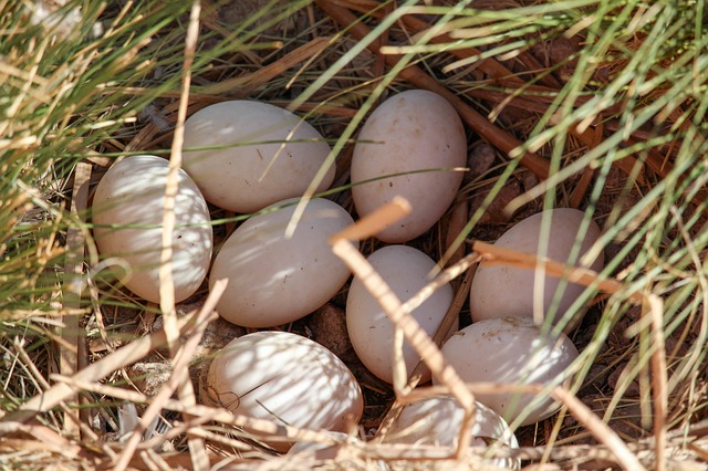 How to Use Duck Eggs - The Self Sufficient HomeAcre
