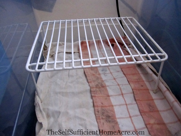 I use a small wire pantry shelf to create a warm nook for the chicks.