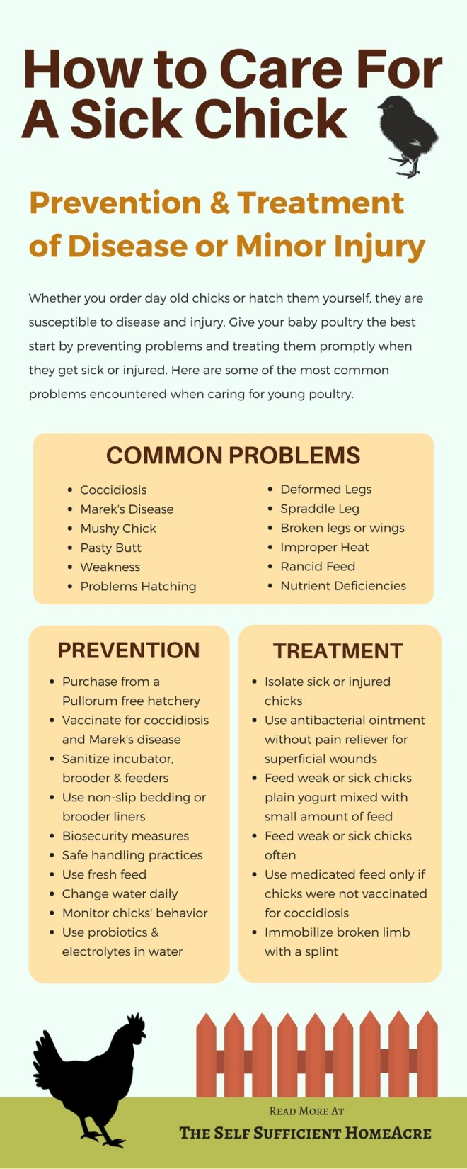 Sick Chick Infographic - The Self Sufficient HomeAcre