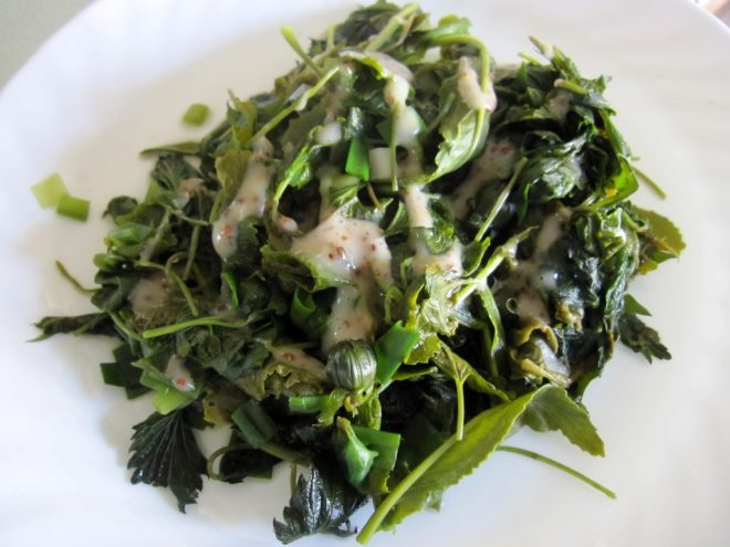 plate of cooked greens - foraged from my backyard