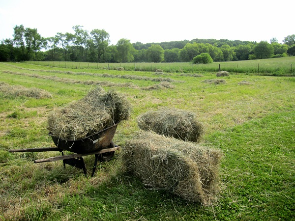 bales of hay made by hand
