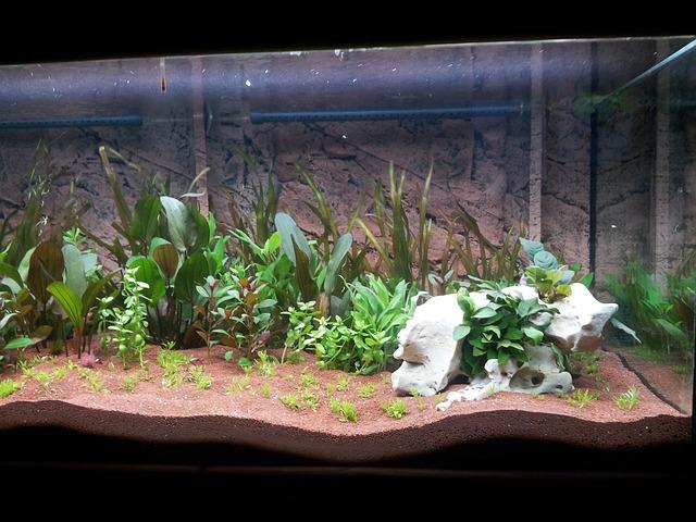 Aquaponics for Organic Growing