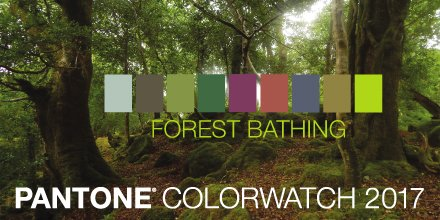 pantone forest bathing swatch The Sensory Coach Shinrin Yoku How To Ease Your Mind In the Forest