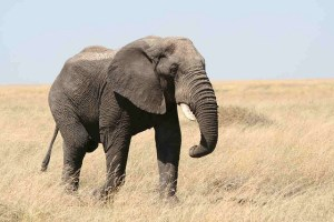 Sensory Processing Disorder is the Elephant in the Room