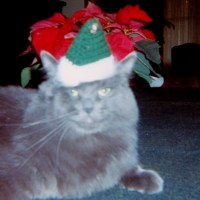 dressing up your pets